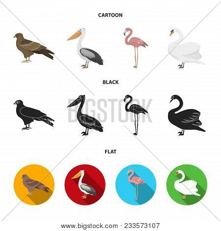 Kite, Pelican, Flamingo, Swan. Birds Set Collection Icons In Cartoon, Black, Flat Style Vector Symbo