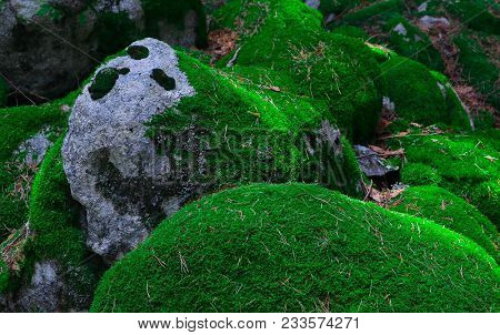 Colorful Green Mossy Big Stones. Photo Depicting A Bright Bushy Lichen On An Old Gray Stones In The