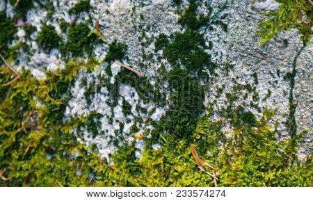Colorful Green Moss Texture. Photo Depicting A Bright Bushy Lichen On An Old Gray Stone Wall. Closeu