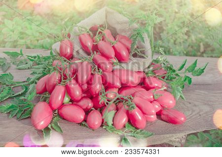 Pink Long Tomatoes In Canvas Bag. Fresh Long Tomato On A Wooden Table.