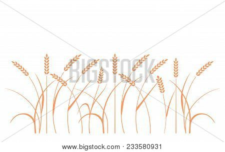Wheat Field Background. Cereals Icon Set With Rice, Wheat, Corn, Oats, Rye, Barley. Ears Of Wheat Br