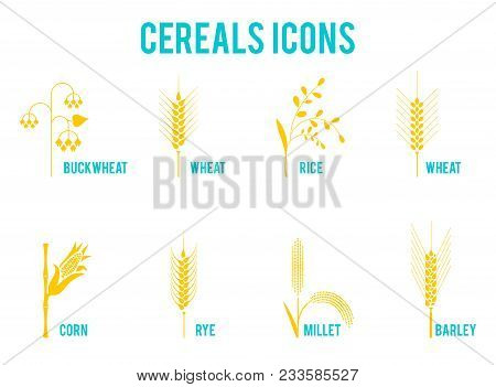 Cereals Icons Of Grain Plants. Set Of Icons With Rice, Wheat, Corn, Oats, Rye, Barley, Wheat, Buckwh