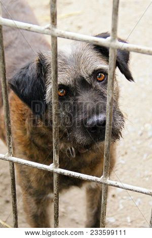 Shelter Homeless Dog In Kennel Cage. Abandoned Dog In Animal Shelter Looking Through Fence Wonder If