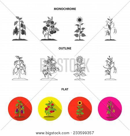 Mushrooms, Strawberries, Corn, Cucumber.plant Set Collection Icons In Flat, Outline, Monochrome Styl