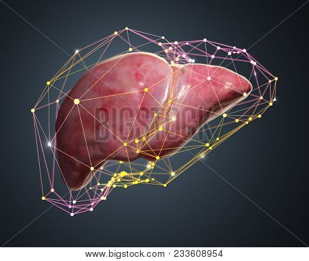 3d Rendered Illustration Of Computer Diagnosis Of The Liver.