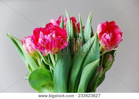 Flower Arrangement With Red Tulips And Green Leaves