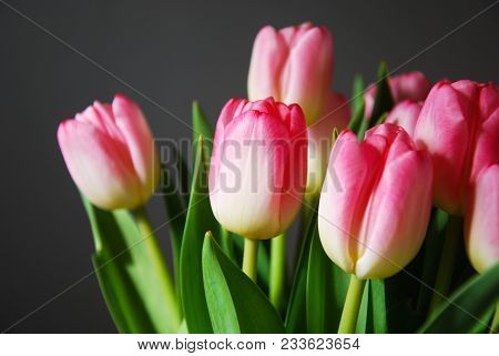 Bright Pink Blossom Tulips In A Boquet