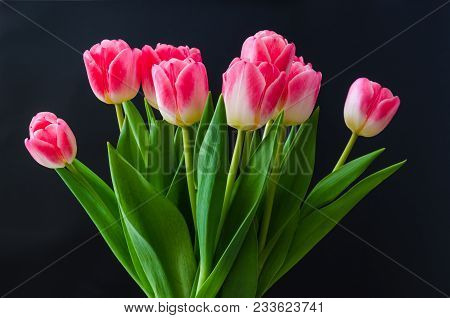 Beautiful Tulip Flowers Boquet By A Black Wall