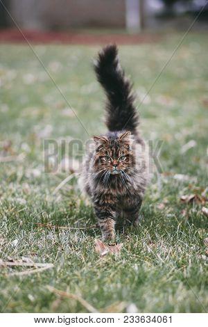A Pet Cat Kitten Stray Outside By Itself.