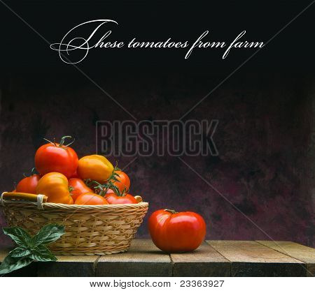 These tomatoes from farm