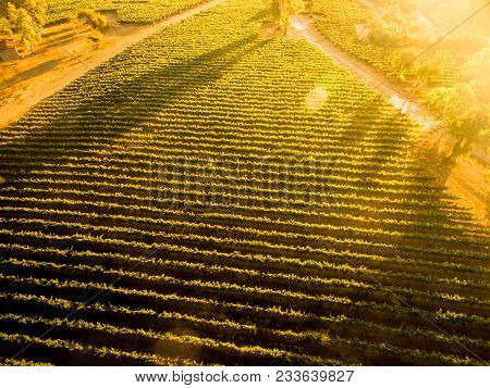 Sunset Over Chilean Vineyard. Aerial View. Lanscape Of Chilean Vineyard