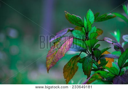 Plants Are Mainly Multicellular, Predominantly Photosynthetic Eukaryotes Of The Kingdom Plantae. The
