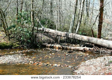 A Shallow Riverbed With A Small Rock Bridge And Large Fallen Trees.