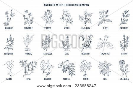 Natural Remedies For Tooth And Gum Pain, Botanical Set. Hand Drawn Vector Illustration