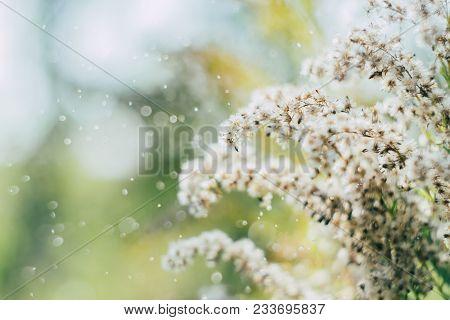Wild Flower Background. White Wild Flower On Field And Sky Background. Vintage Autumn Wild Flower In