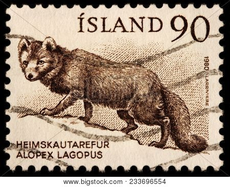 Luga, Russia - January 16, 2018: A Stamp Printed By Iceland Shows Arctic Fox, Also Known As The Whit