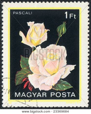 Pascali Rose