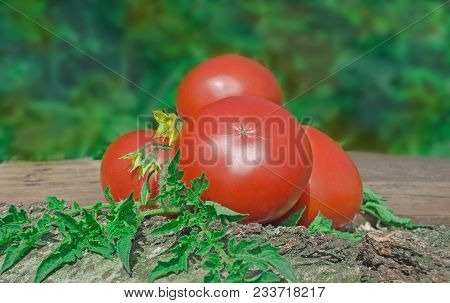 Fresh Red Tomatoes On Wooden Background.