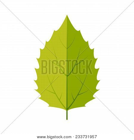 White Aspen Leaf Icon Vector Design Illustration. Free Royalty Images.