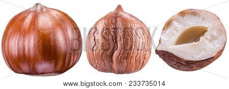 Set of hazelnuts or filberts. Nut and kernel of hazelnut. Clipping path.