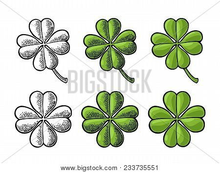 Good Luck Four Leaf Clover. Vintage Color And Black Vector Engraving Illustration For Info Graphic,