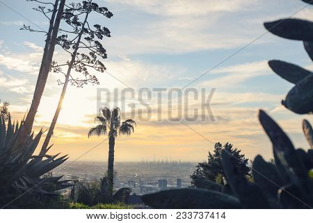 Stunning Panoramic Morning View Of Downtown Los Angeles And Hollywood Shot From Runyon Canyon, Holly