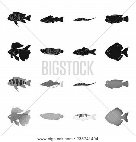 Discus, Gold, Carp, Koi, Scleropages, Fotmosus.fish Set Collection Icons In Black, Monochrome Style