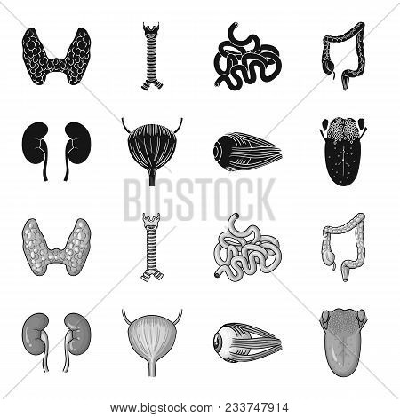 Kidney, Bladder, Eyeball, Tongue. Human Organs Set Collection Icons In Black, Monochrome Style Vecto