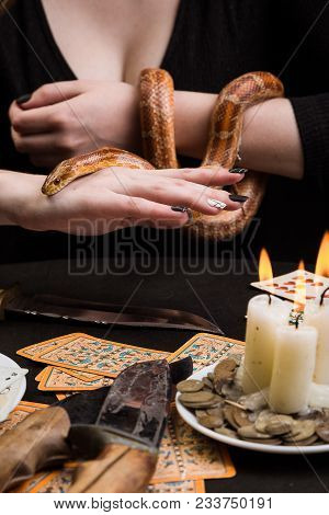 Discontented Snake On The Hands Of A Fortuneteller In Front Of A Table With Magic Objects