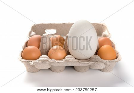 Giant Size Goose Egg Between Small Chicken Eggs In A Package Concept Of Size Comparison