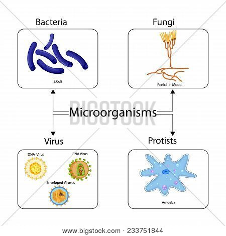 Education chart vector photo free trial bigstock education chart of biology for types of microorganism diagram vector illustration ccuart Choice Image