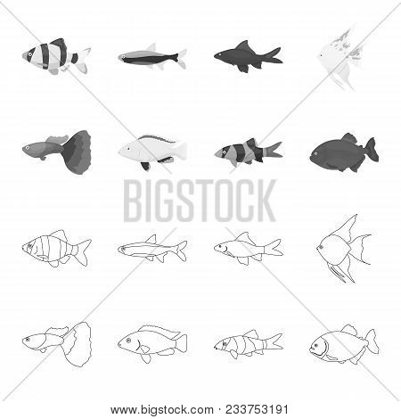 Botia, Clown, Piranha, Cichlid, Hummingbird, Guppy, Fish Set Collection Icons In Outline, Monochrome