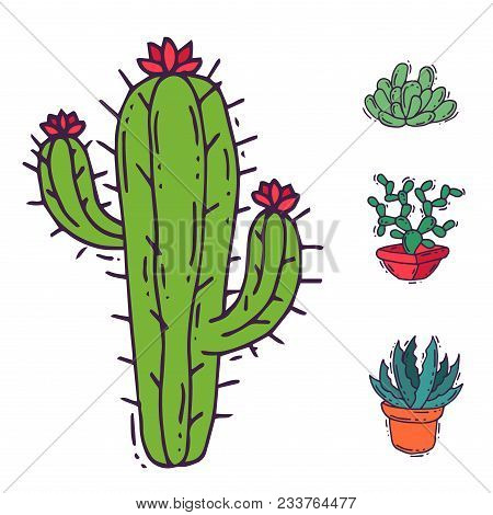 Cactus Home Nature Vector Illustration Of Green Plant Cactaceous Tree With Flower. Cute Cartoon Cact