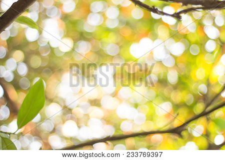 Nature Blurred Light Abstract Background / Natural Outdoors Bokeh Background, Blurred Forest Backgro