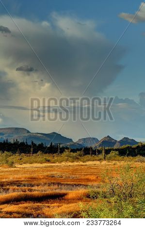 Late Evening Light Illuminating The Saguaros And Mountains In The Sonoran Desert In High Dynamic Ran