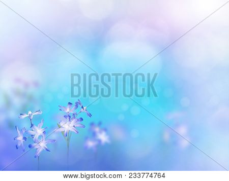 Glory Of The Show Flowers In The Corner Of Turquoise Blurred Background. Floral Desktop. Blue Chiono