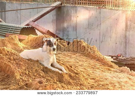 Dog in summer are fretting and fierce from hot weather and risk to Hydrophobia.Rabies from the dog is a viral disease that causes inflammation of the brain in humans and other mammals. poster