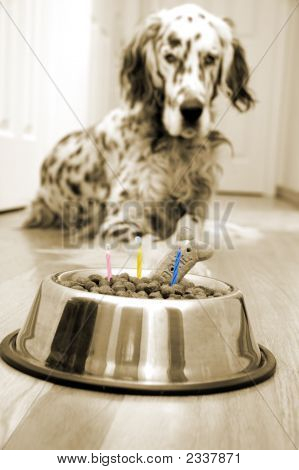 "Dog in front of his ""Birthday cake"" with candles. Sepia image poster"