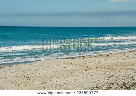Seagulls Sunbathing On A Quiet Beach With A Few Waves Coming In