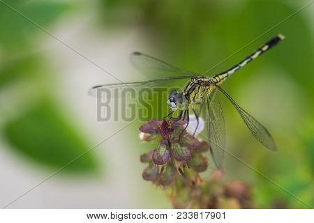 a close up of yellow dragon fly