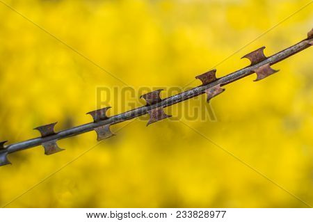 A Barbed Concertina Wire Used Here To Demarcate A Boundary. I Came Across This Concertina Wire In A