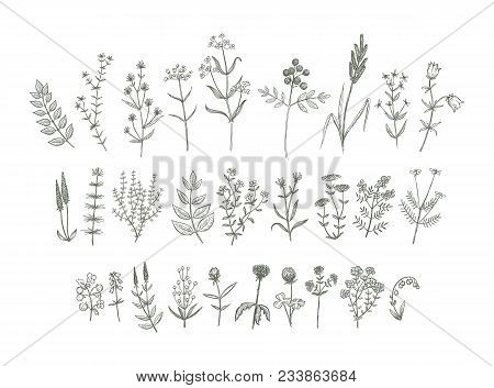Set Of Sketchy Hand Drawn Flowers. Vintage Style Field Flowers And Plants Illustration Collection. C