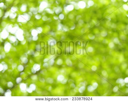 Fresh Healthy Green Bio Bokeh Blurred Background From Foliage Tree And Sunlight.