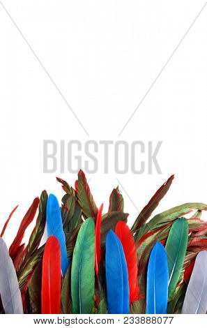 Bright parrot feathers. Colored feather