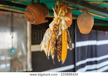 Dried Corn Cob. Corn Dried For Winter. Also Used For Decorative Purposes.