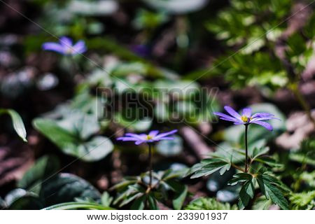 First Spring Forest Flowers