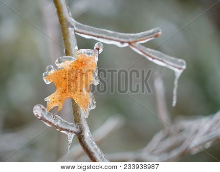 Close Up On Yellow Leaf Frozen In Ice After Frozen Rain