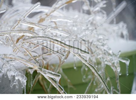 Dry Grass With Frozen Ice In Frozen Rain