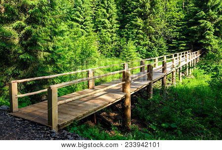 Small Wooden Bridge Among The Forest. Lovely Nature Scenery In Summertime. Location Synevyr National