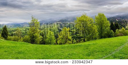Panorama Of Grassy Hillside Above The Forest In Mountains. Dramatic Cloudy Sky On A Rainy Day. Dull